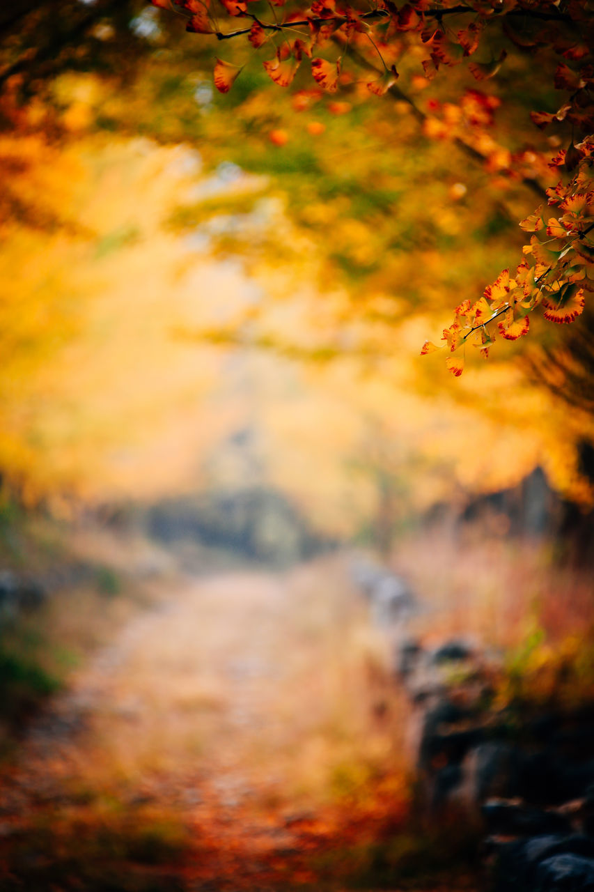 nature, autumn, change, beauty in nature, tranquility, tree, scenics, orange color, growth, outdoors, tranquil scene, forest, no people, leaf, sunset, landscape, grass, day, close-up