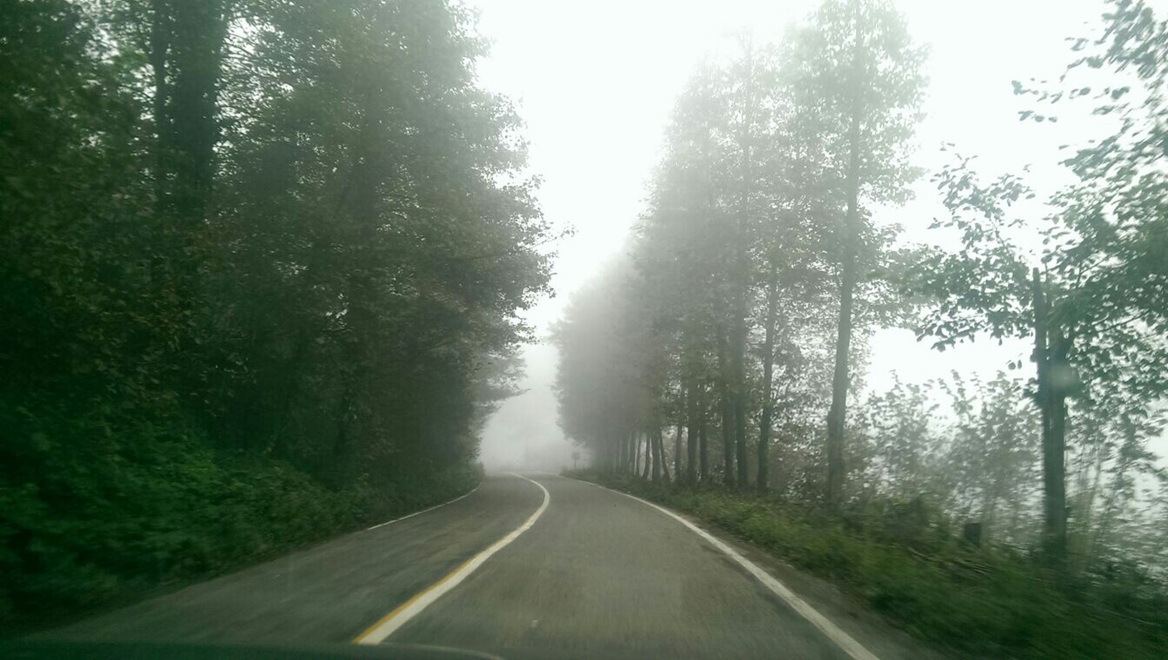 the way forward, transportation, tree, road, diminishing perspective, vanishing point, country road, road marking, empty road, fog, tranquility, nature, sky, forest, tranquil scene, growth, day, no people, non-urban scene