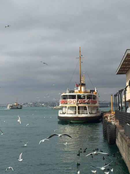 Vapur Istanbul Martı Kadraj Kare Altınkare Benimkadrajım Canımİstanbul IPhon6 Türkiye Benden Severekçekiyoruz Durdurzamanı Bakmak