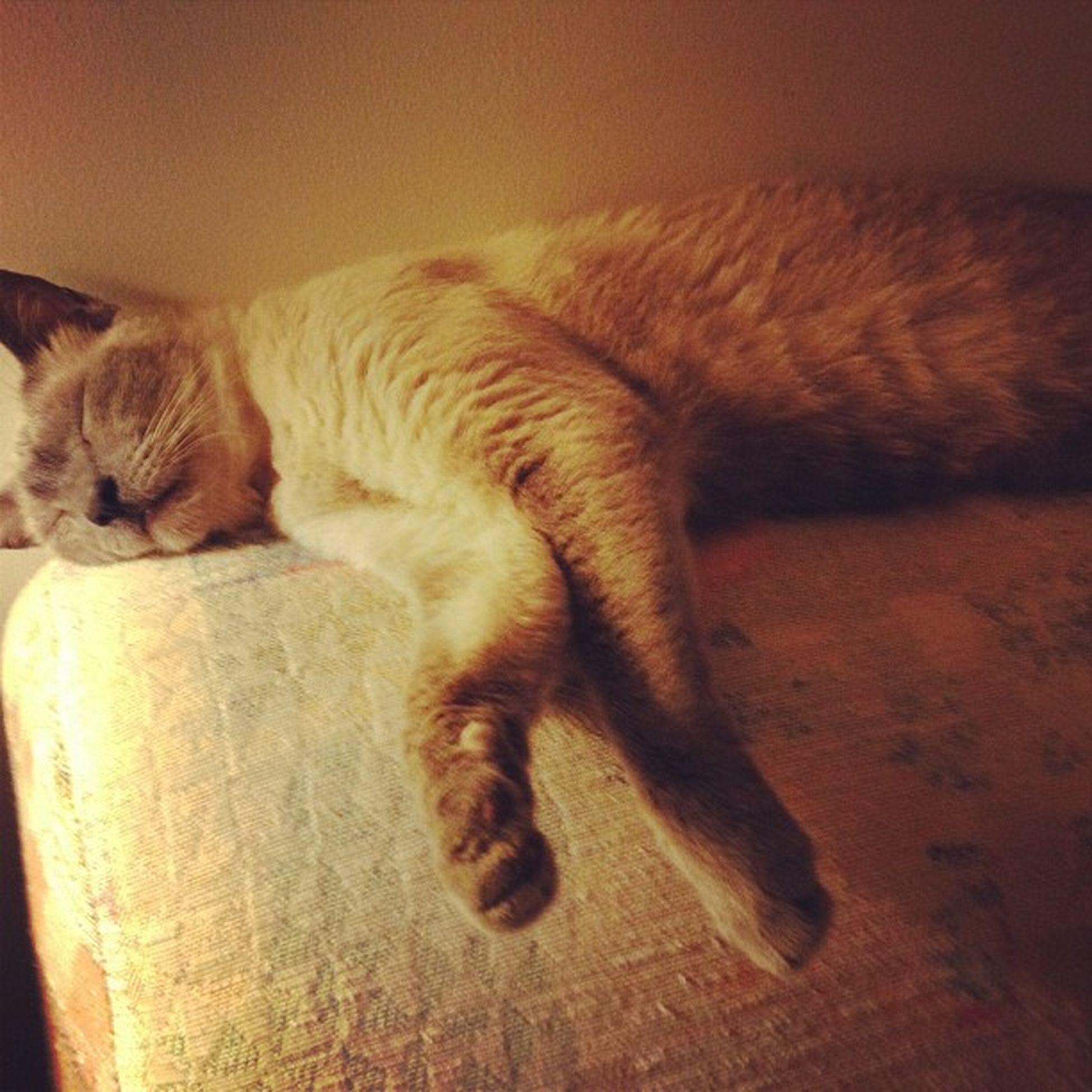 Snowball Catlady CatsForLife