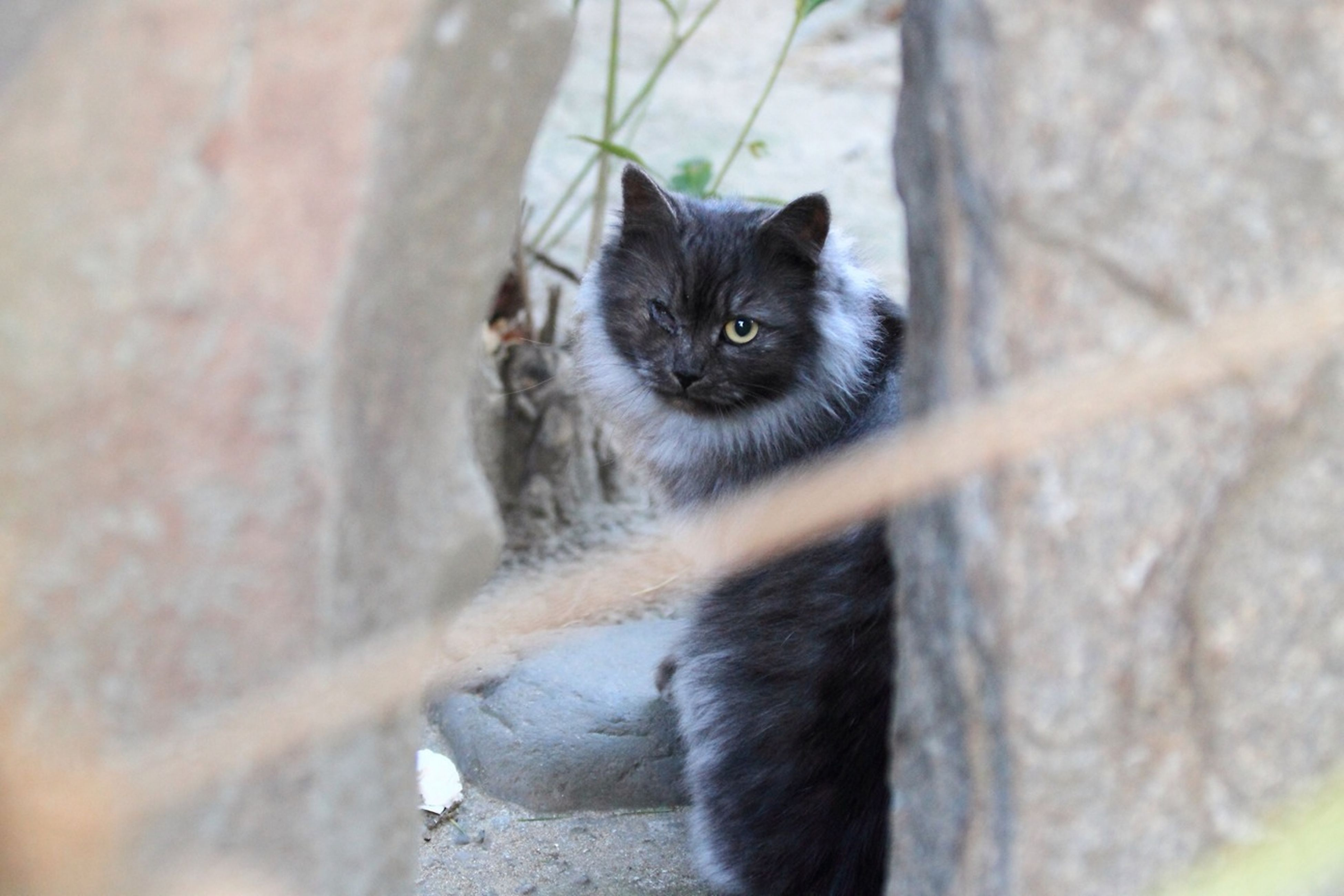The Stray Cat Which Lives In The Shrine. He Has Lost One Eye. But He Is Strongly Alive.②
