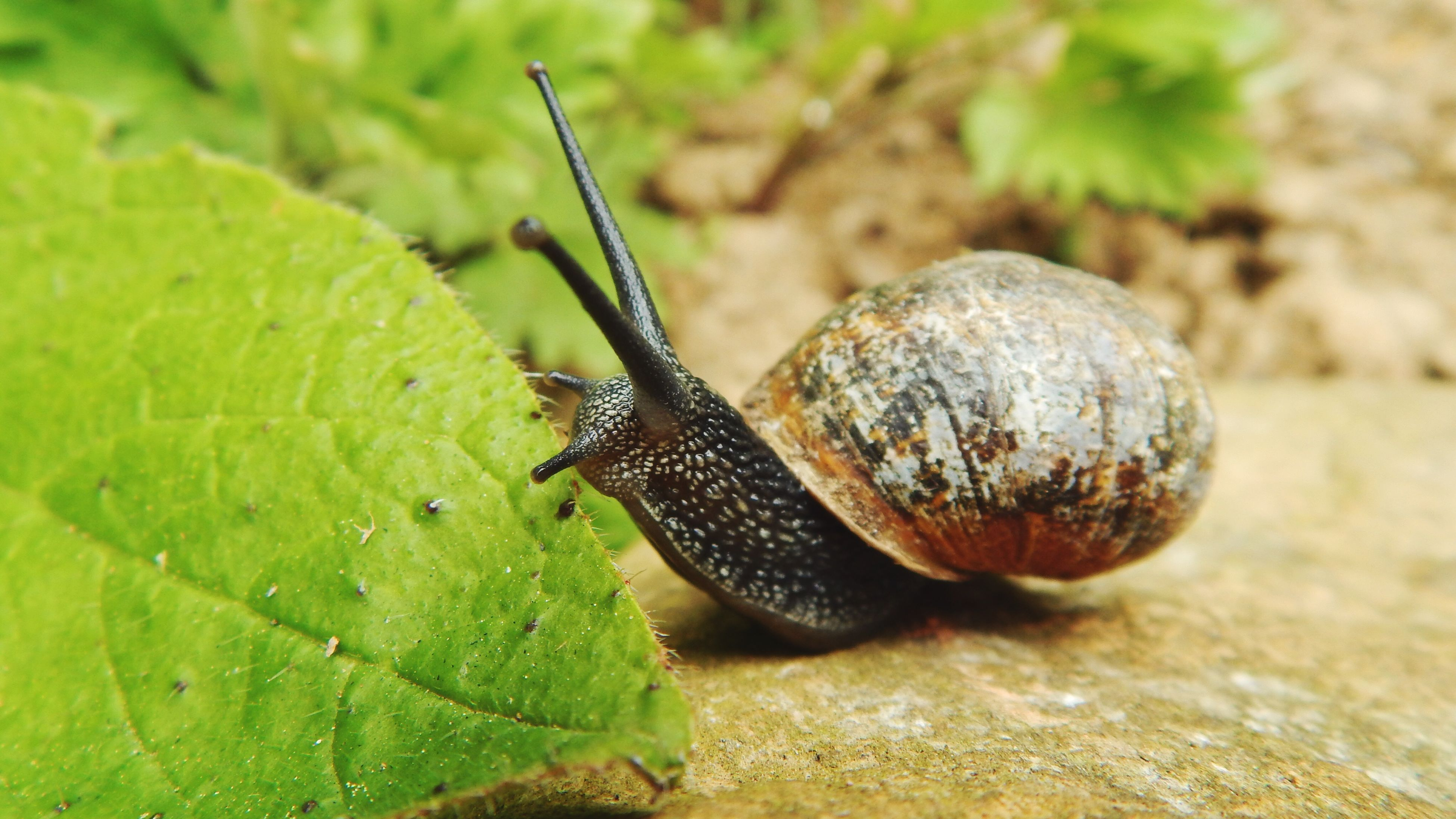 animal themes, wildlife, close-up, focus on foreground, nature, green color, leaf, animal antenna, selective focus, plant, snail, day, outdoors, beauty in nature, no people, animal, growth, natural pattern, green, black color