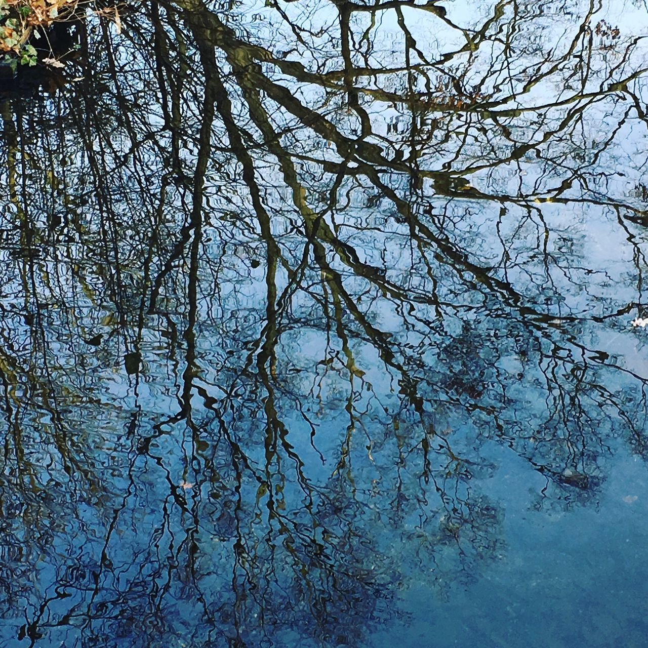 Reflection Reflections Blue Sky Water Reflections Tree Treeshadow Tree Reflection  Branch Beauty In Nature Outdoors Tranquility Blue Water Blue Water Blue Sky In Motion