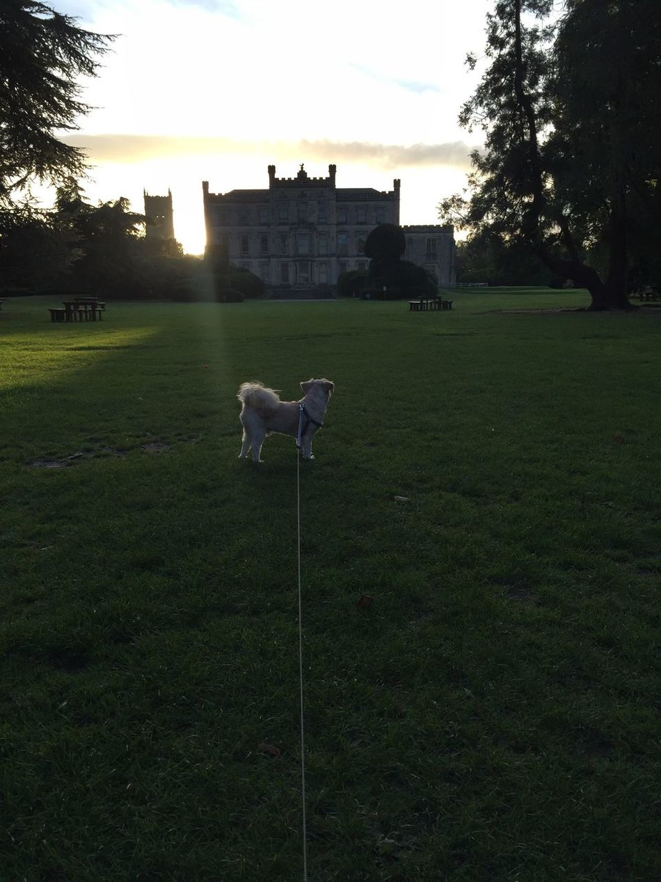 Grass Tranquility Sky Tranquil Scene Tree Sunset Dog Sillouette Elvaston Castle Lovethisplace Lovethisdog Evening Walk OnaLeash Sun Field Lawn Green Color Outdoors Building Exterior Castle Derby United Kingdom Lakeside