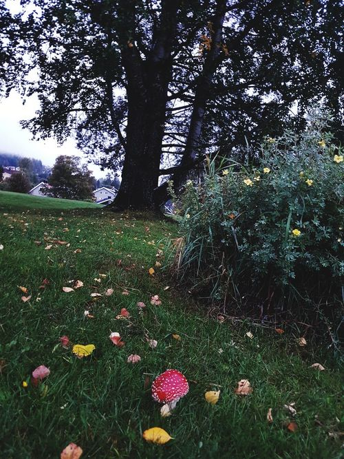 Norway natur tree Mushrooms Grass Growth Atumn Is Here ... Fall Mood!