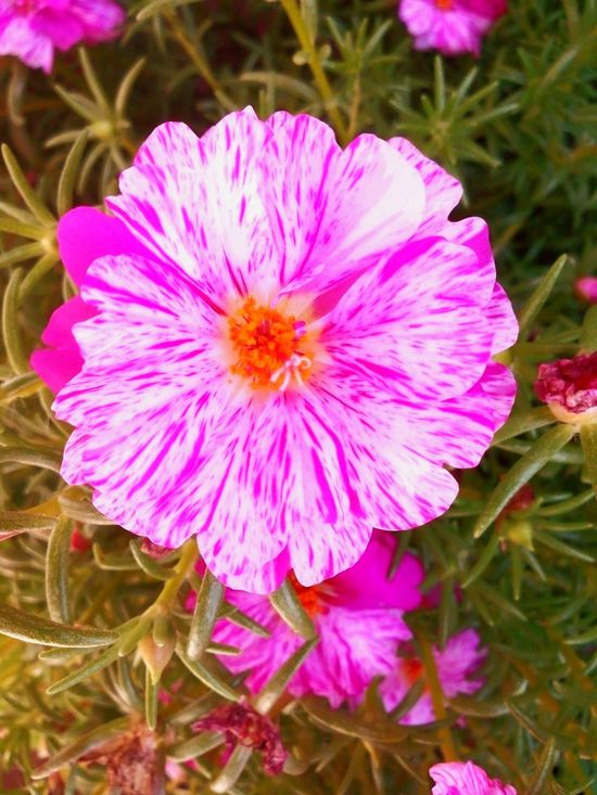 Flower Plant Pink Color Day