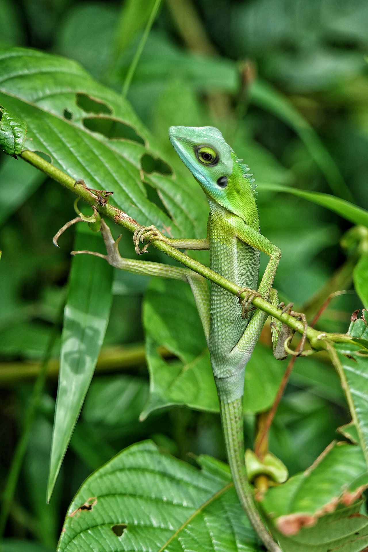 Long Tailed Green Lizard Lizard Eyeem Lizards Lizards Lizard Watching EyeEm Nature Lover EyeEmBestPics EyeEm Best Shots - Nature EyeEm Best Shots Capture The Moment