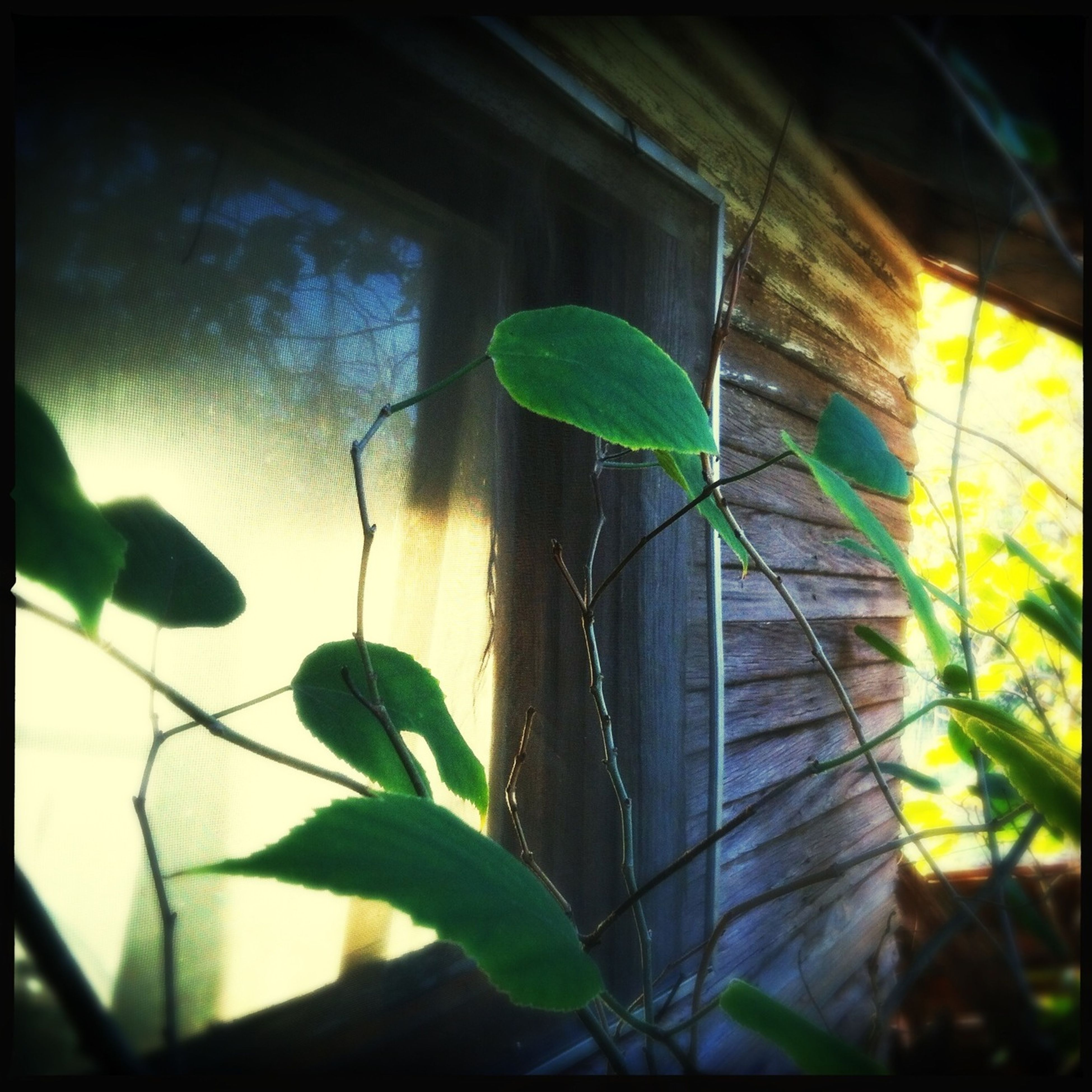 leaf, plant, growth, built structure, architecture, close-up, window, building exterior, auto post production filter, nature, low angle view, focus on foreground, sunlight, green color, indoors, day, no people, glass - material, wall - building feature