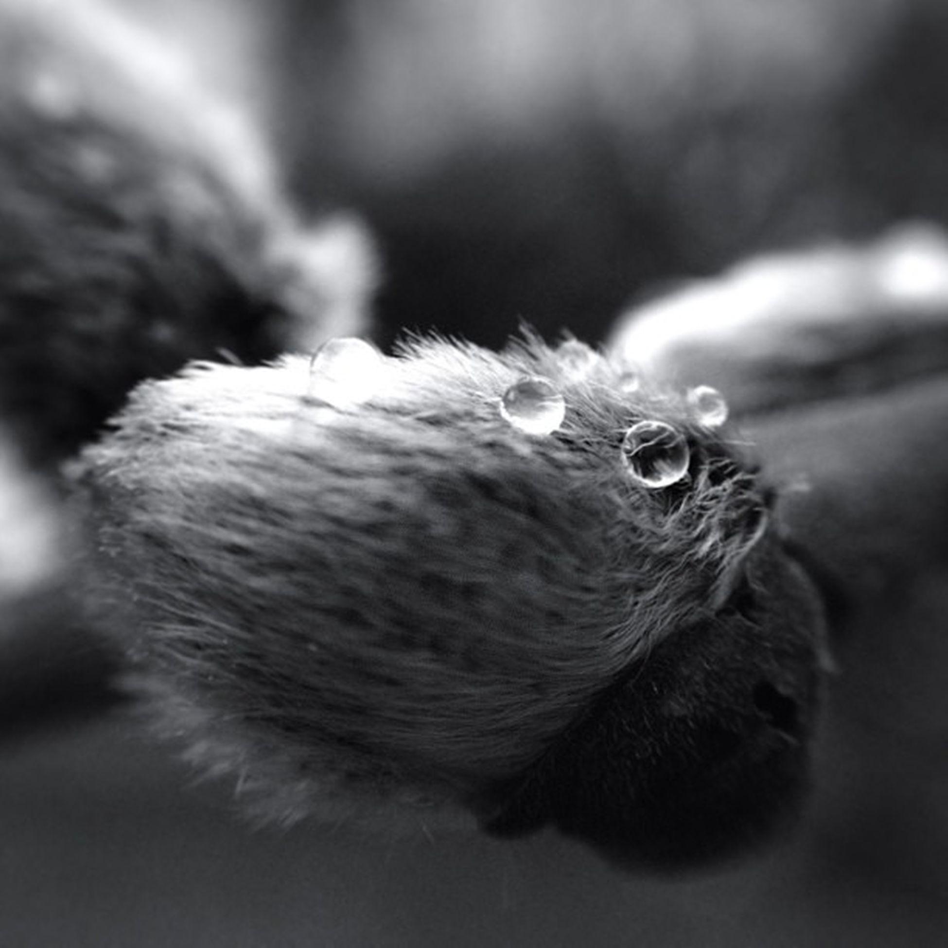 Spring Catkin . Jj_forum_0570 Macro Olloclip Blackwhite Blackandwhite