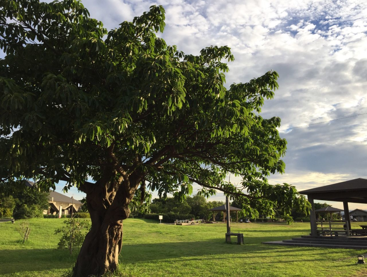 tree, built structure, day, grass, green color, no people, tranquility, architecture, outdoors, nature, sky, growth, building exterior, landscape, beauty in nature
