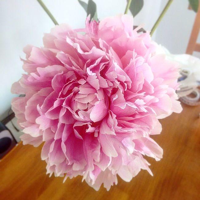 Our peonies are really opening up. Iglondon Androidonly Flowers Flower Peony  Peonies Pink Home Columbiaroadflowermarket Columbiaroad Eastlondon London