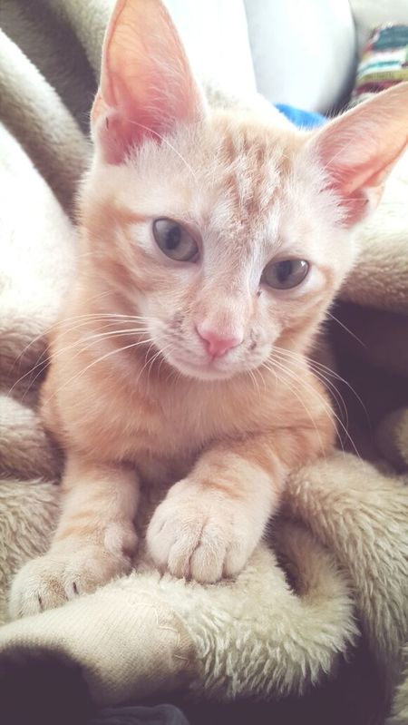 My kitten, Nacho. Kitten Pets Cat Cute