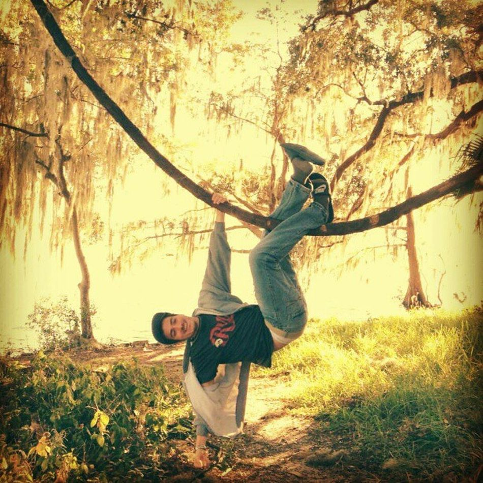Nature Hangingfromtrees Florida Swamplands