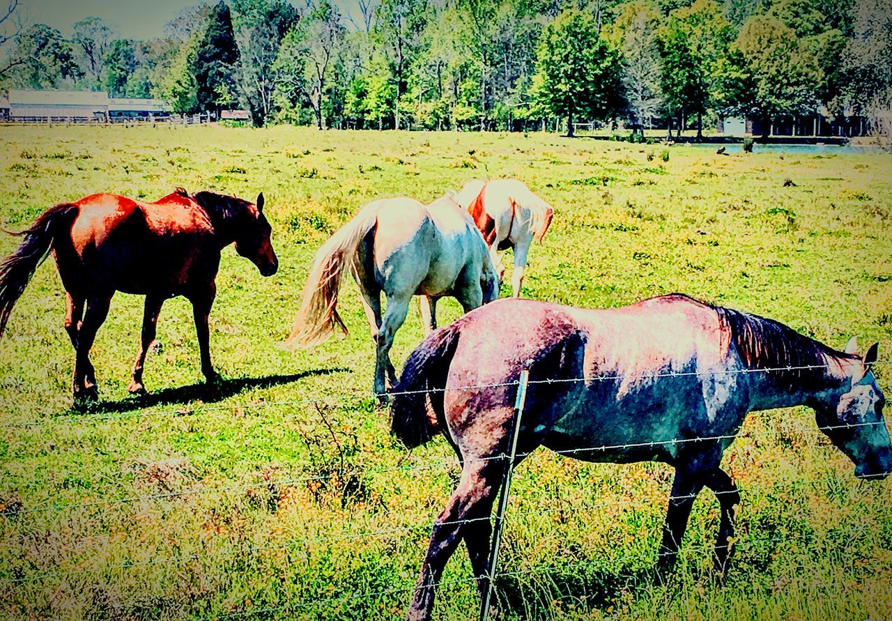 Animal Themes Domestic Animals Horse Grass Livestock Tree Mammal Field Nature Sunlight Landscape Grazing Growth No People Pasture Day Working Animal Outdoors Sky Beauty In Nature