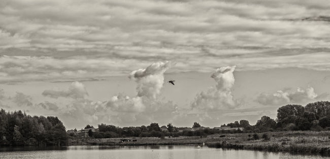 Southward Animal Themes Animals In The Wild Beauty In Nature Bird Cloud Cloud - Sky Cloudscape Dutch Countyside Dutch Landscape Flying Lake Nature Sky Spread Wings Tranquility Tree Water Waterfront Wildlife