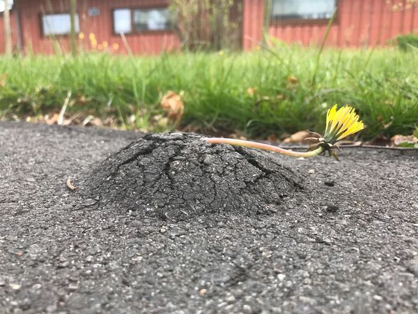 i want to break free Day Outdoors No People Nature Growth Close-up Plant Grass Flower Beauty In Nature Dandelion The Great Outdoors - 2017 EyeEm Awards