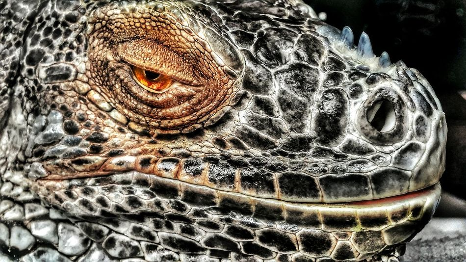 Reptile One Animal No People Animal Themes Are You Talking To Me ? Dinosaur Dinosaurier  Dino Dinosaurio Eye Pets? Are You Looking At Me? Are You Kidding Me? WTF LOL!