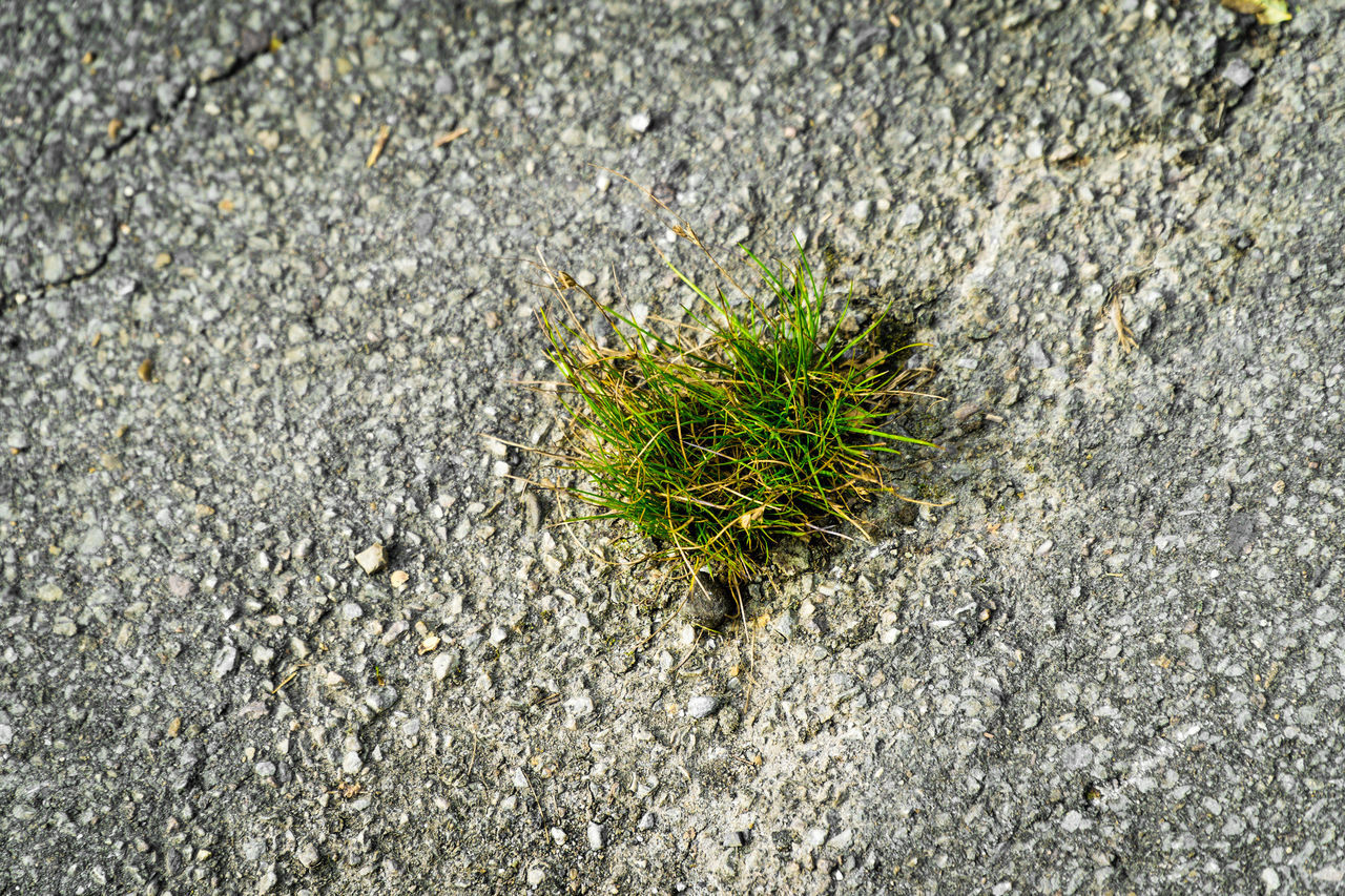 nature, outdoors, day, close-up, no people, asphalt, growth