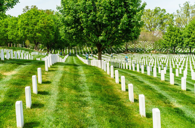 Arlington National Cemetery Beauty In Nature Day Diminishing Perspective Footpath Grass Graveyard Graveyard Beauty Green Color Growth In A Row Lawn Lawnmower Military Mower Nature Paris Soldiers Spring The Way Forward Tranquil Scene Tranquility Tree Washington, D. C. Worker