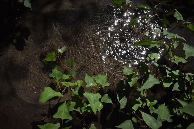湧き出ずる水の煌きや。 Nature Beauty In Nature Leaf 湧水 Spring Water Spring Sparkles