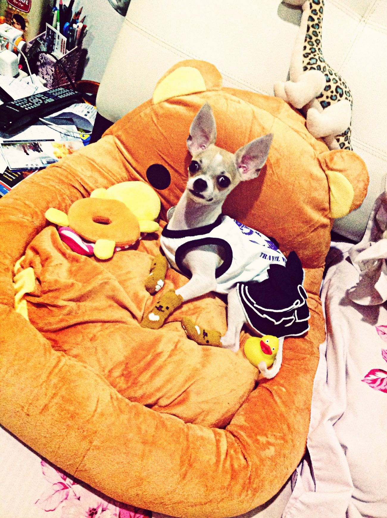 My Girl...??? My Puppy ❤ Relaxing Love It Dolls