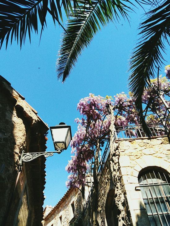 Low Angle View Architecture Built Structure Day Outdoors Building Exterior Tree Sky No People City Summertime Eye4photography  Picoftheday Eyeemphotography Beach Clear Sky Nature EyeEm Gallery Good Views Amateurphotography Barcelona, Spain Leaves 🍁 Palm Tree
