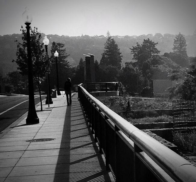 Loner Loner Life Human Condition Long Journey Crossing The Bridge Napa River Alone