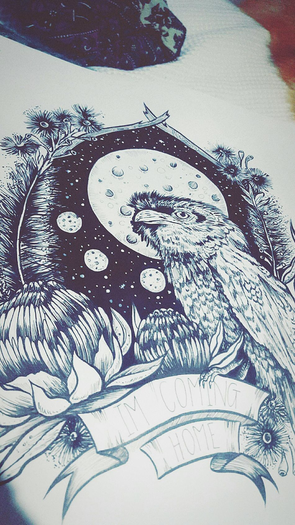 Artist Home Australia Summer Photography Life Love Nature Melbourneartists Inspire Createdaily Dotwork Fineliner Illustration Art Summerstone Animal Tawny Frogmouth Owl Waratah Bottlebrush Redgum Flowers Natives Moon