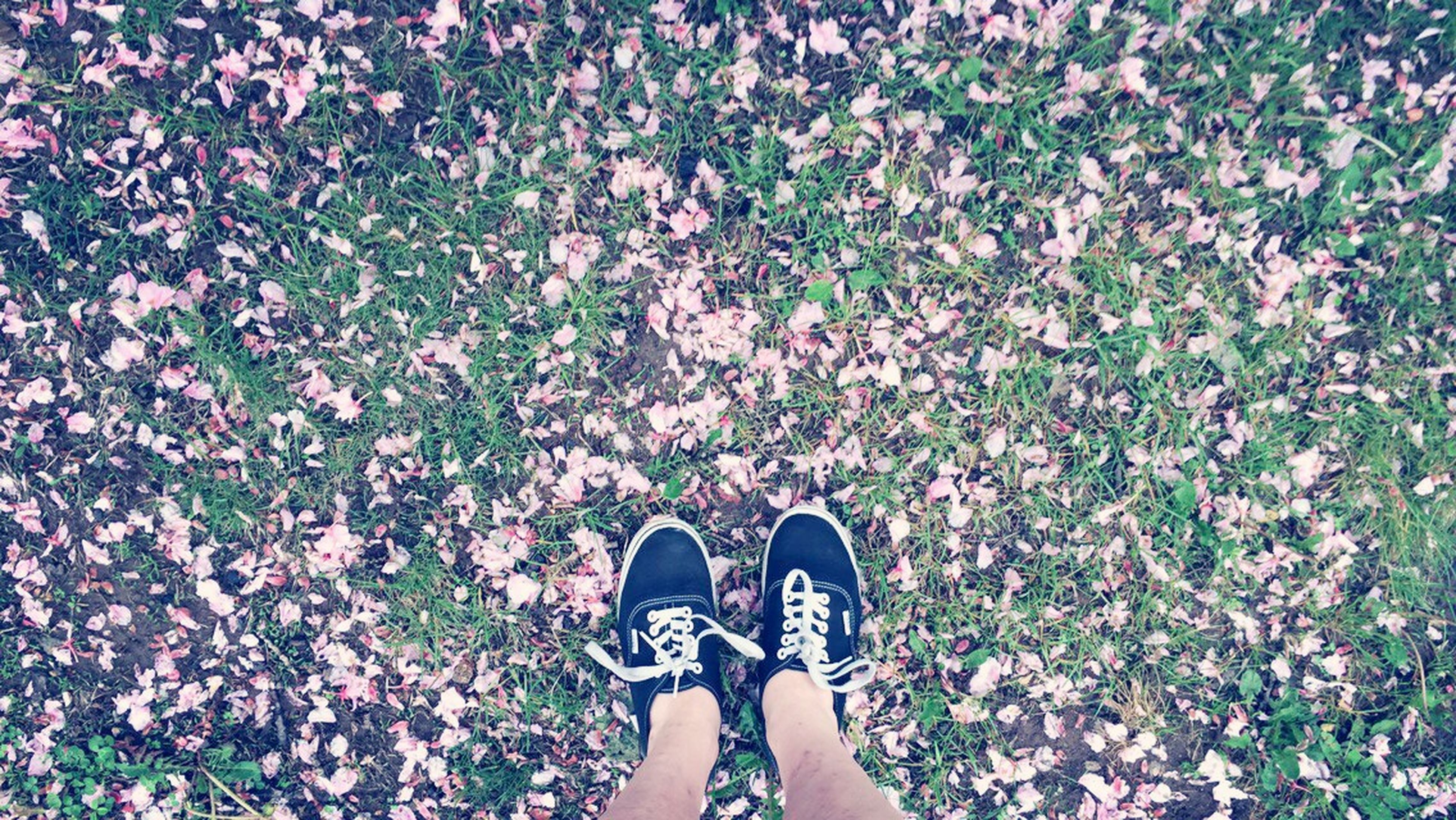 low section, person, personal perspective, shoe, standing, human foot, lifestyles, high angle view, leisure activity, footwear, flower, grass, field, directly above, outdoors, day