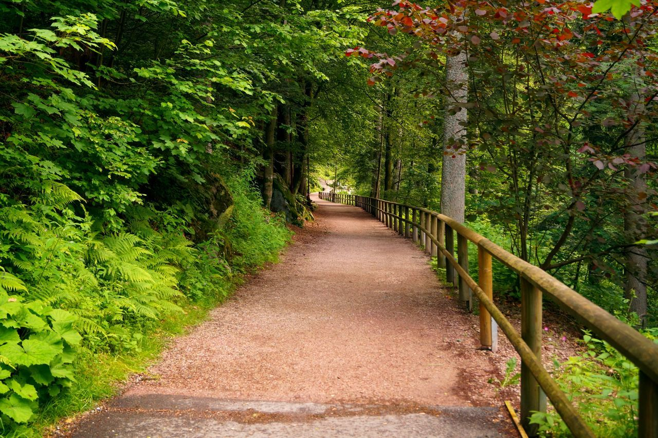 Nature Path Green Leaves Green Trees Path In Nature Wooden Railing Sony A58 at Triberger Wasserfälle