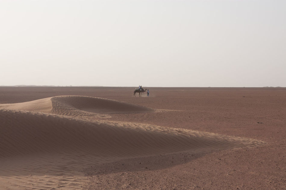 Beautiful stock photos of desert, Animal Themes, Arid Climate, Camel, Day