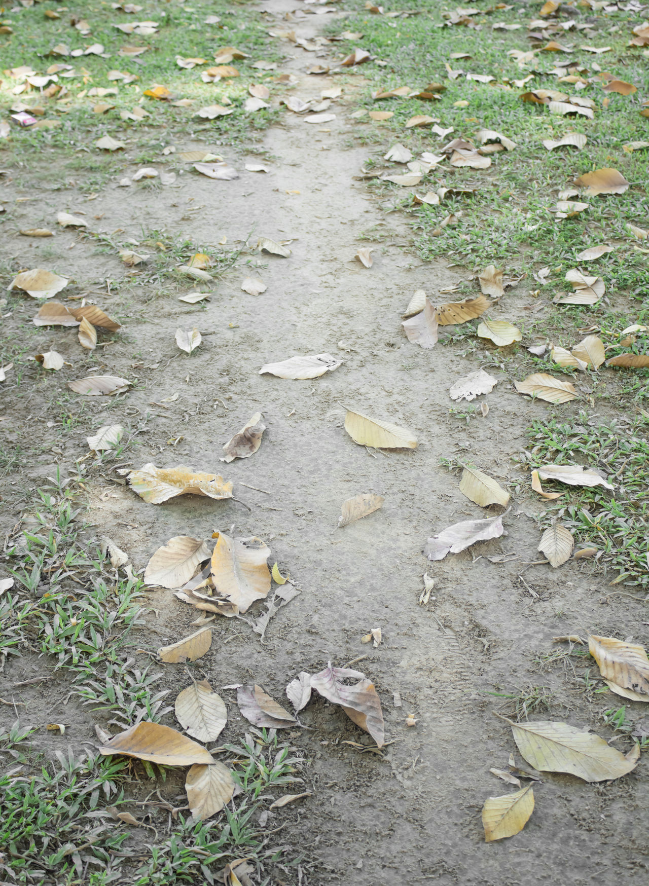 Nature Autumn Backgrounds Beauty In Nature Close-up Day Full Frame High Angle View Leaf Leaf Photography Leaf 🍂 Leafs Leafs Photography Leafs 🍃 Leaves Nature Nature Nature Photography No People Outdoors Path Path In Nature Paths Pathway Pathways