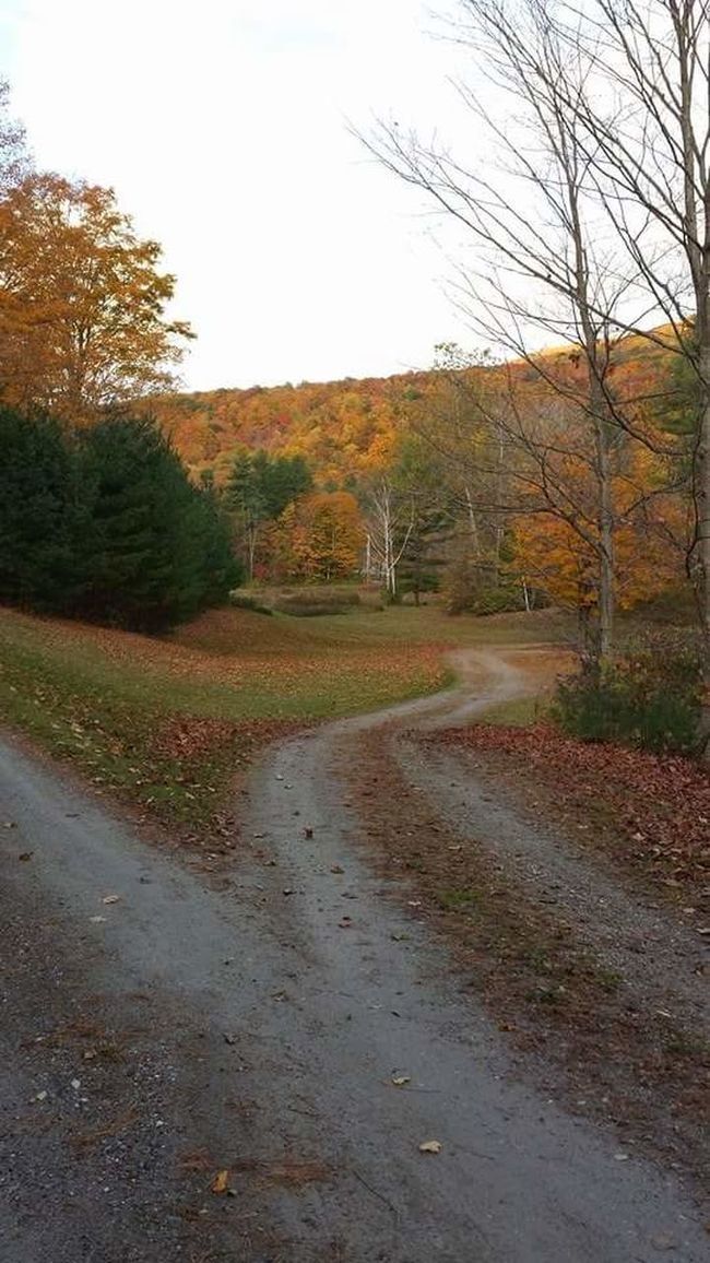 On A Country Road Which Road Will You Take? Early Fall Fall Colors Green Mountain State