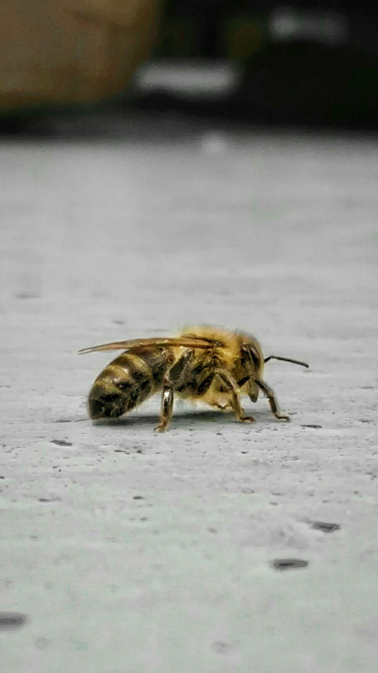 """Nearby d.æ HarryBee, Hair StyleLanded On The Floor Beton Bottom Break Biene 🐝 Pause Flauschig  Biene Gold Have A Break Zeitaus Zwischenraum, kurz nachder NAH- Aufnahme beschloss ein beherzter Schritt schließl. den unerblickten Schluss jener kleinen (bee)ne! iCH schrie auf als hätte meines Kollegens Vollgummipantoffel mich selbst """"betroffen"""" :""""]"""