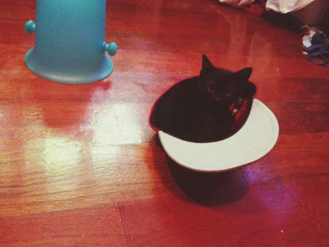 Kitten in a hat. Kitten Hat Animals