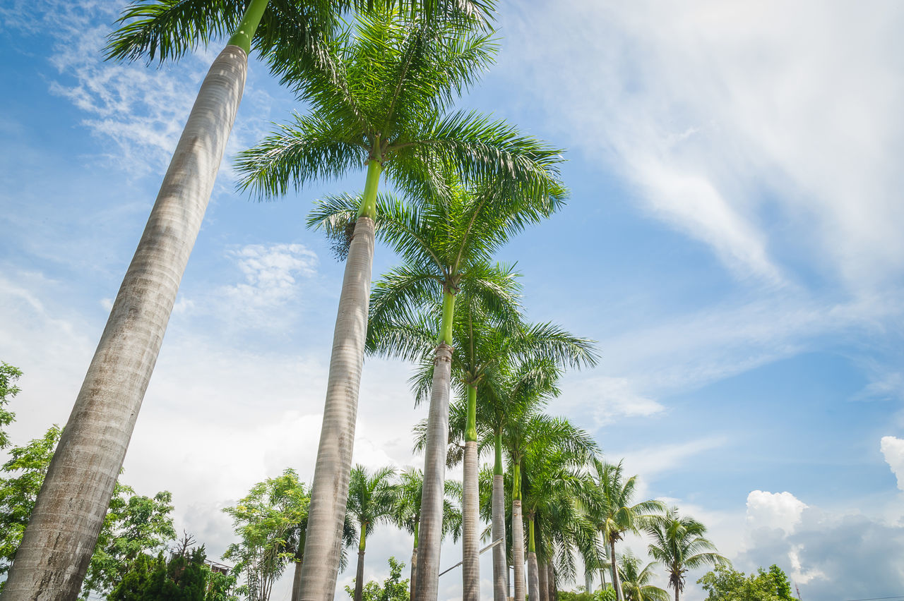 Beautiful stock photos of palm tree, Beauty In Nature, Chiang Mai, Cloud - Sky, Color Image