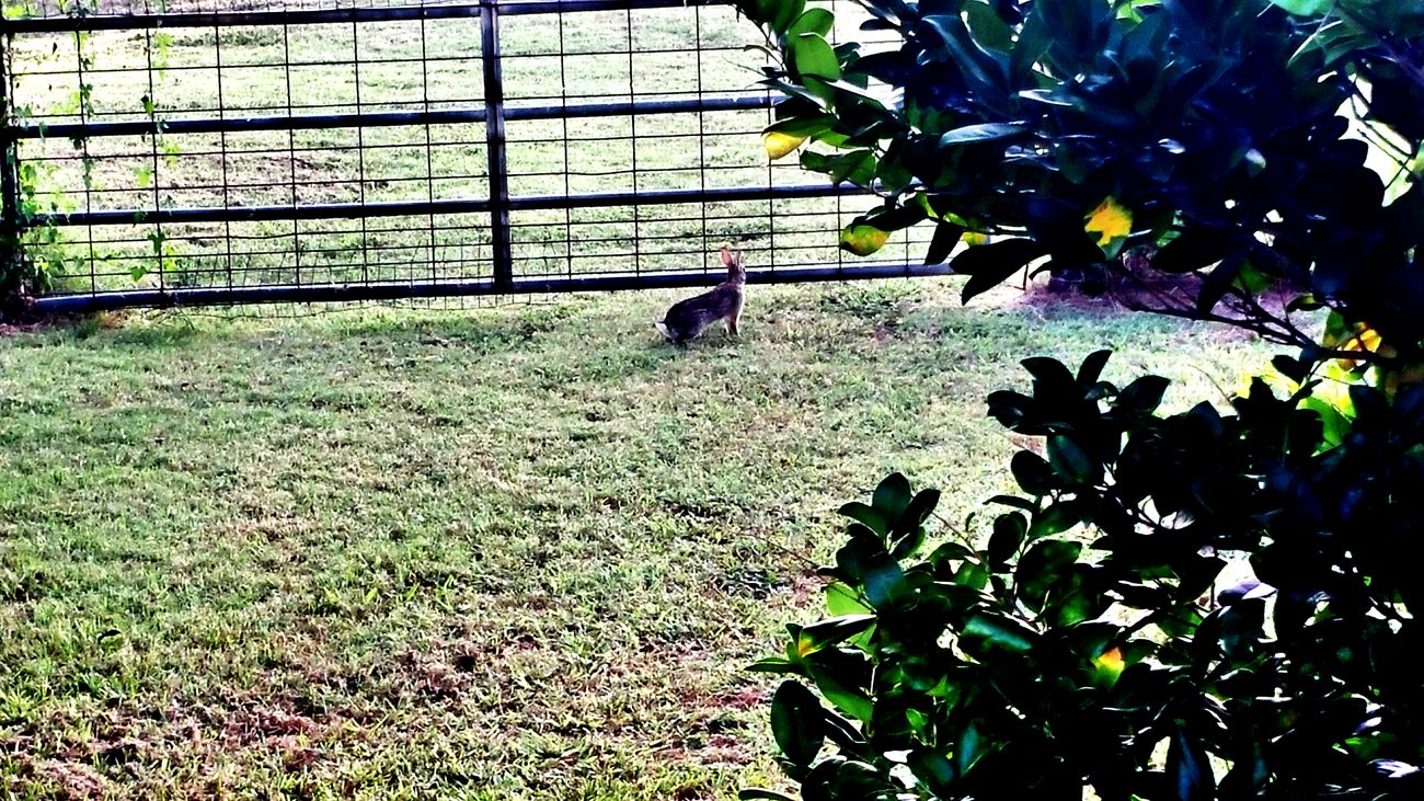 Heading home Taking Photos My Backyard Rabbits Urban Wildlife