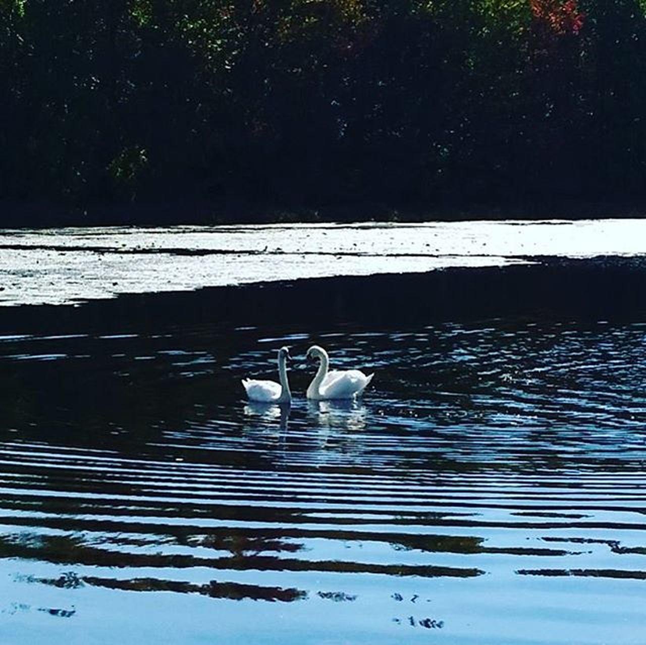 Aww little love birds. Fishon Fishinglife Stren Mepps Zmainbaits Chatterbait Mitchellreels