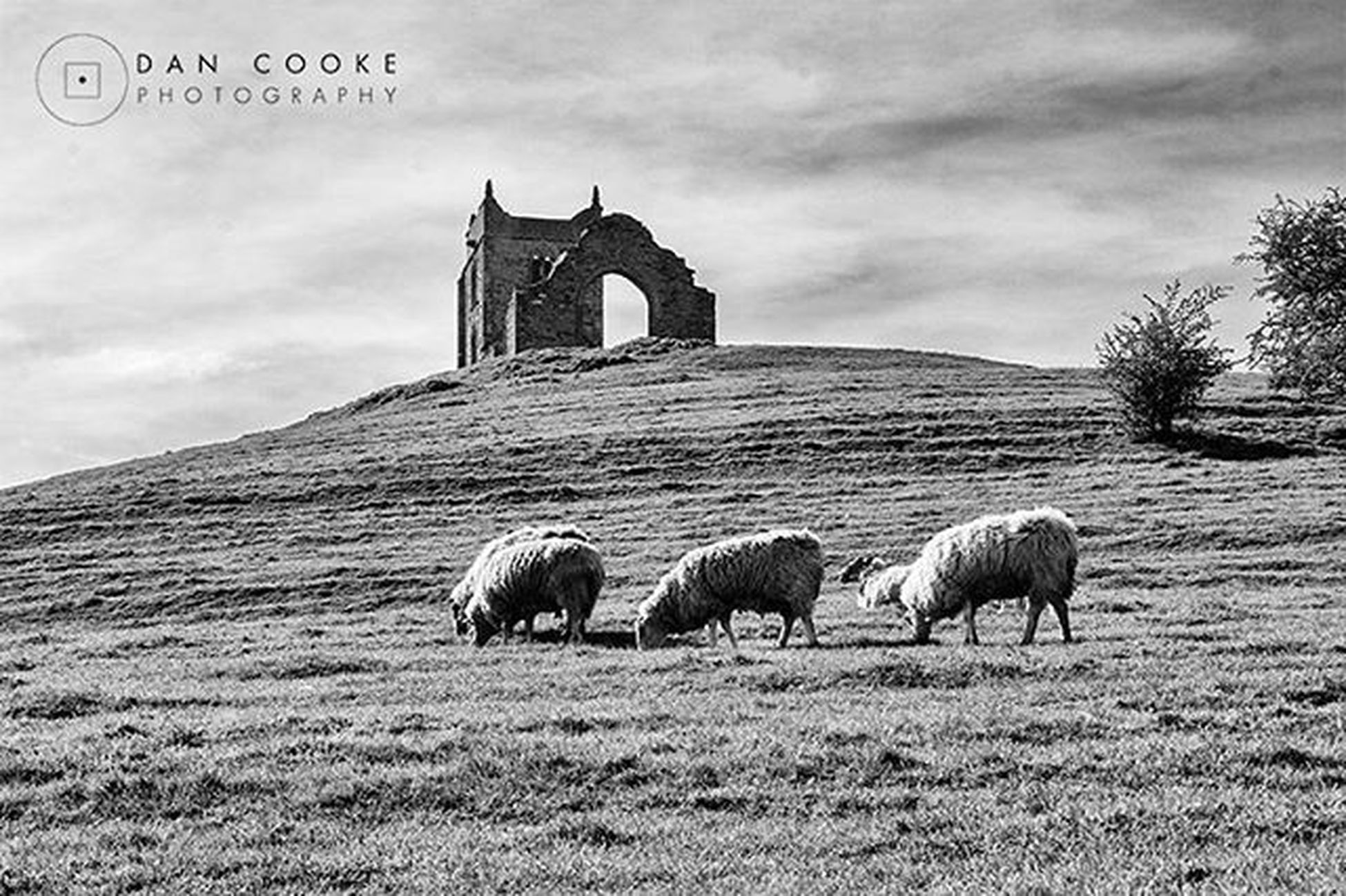 More from my afternoon with the camera out on the Somerset Levels Burrowmump Burrowbridge Somerset Monophotography Monochrome Monoart Blacknwhite
