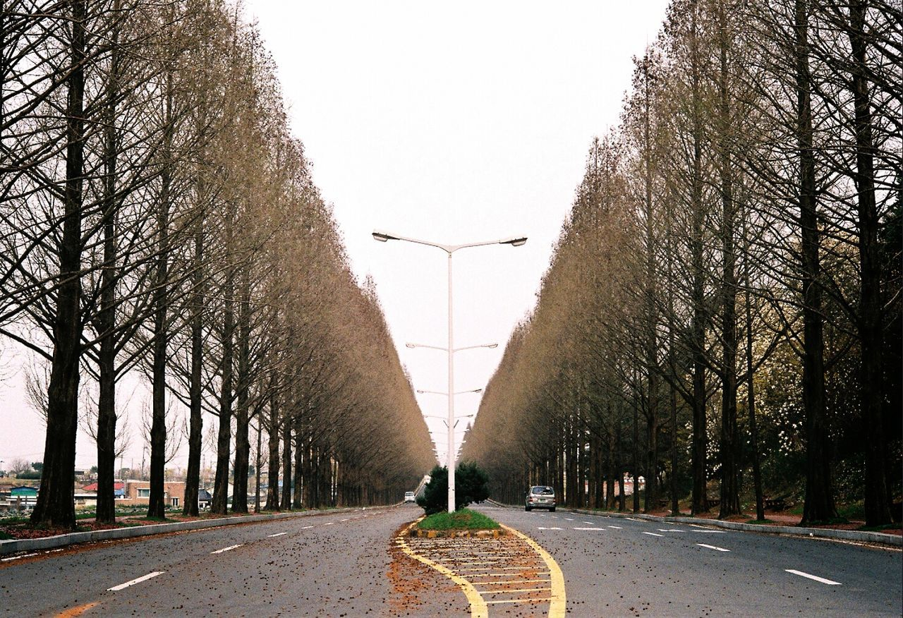 Beautiful stock photos of south korea, Bare Tree, Clear Sky, Day, In A Row
