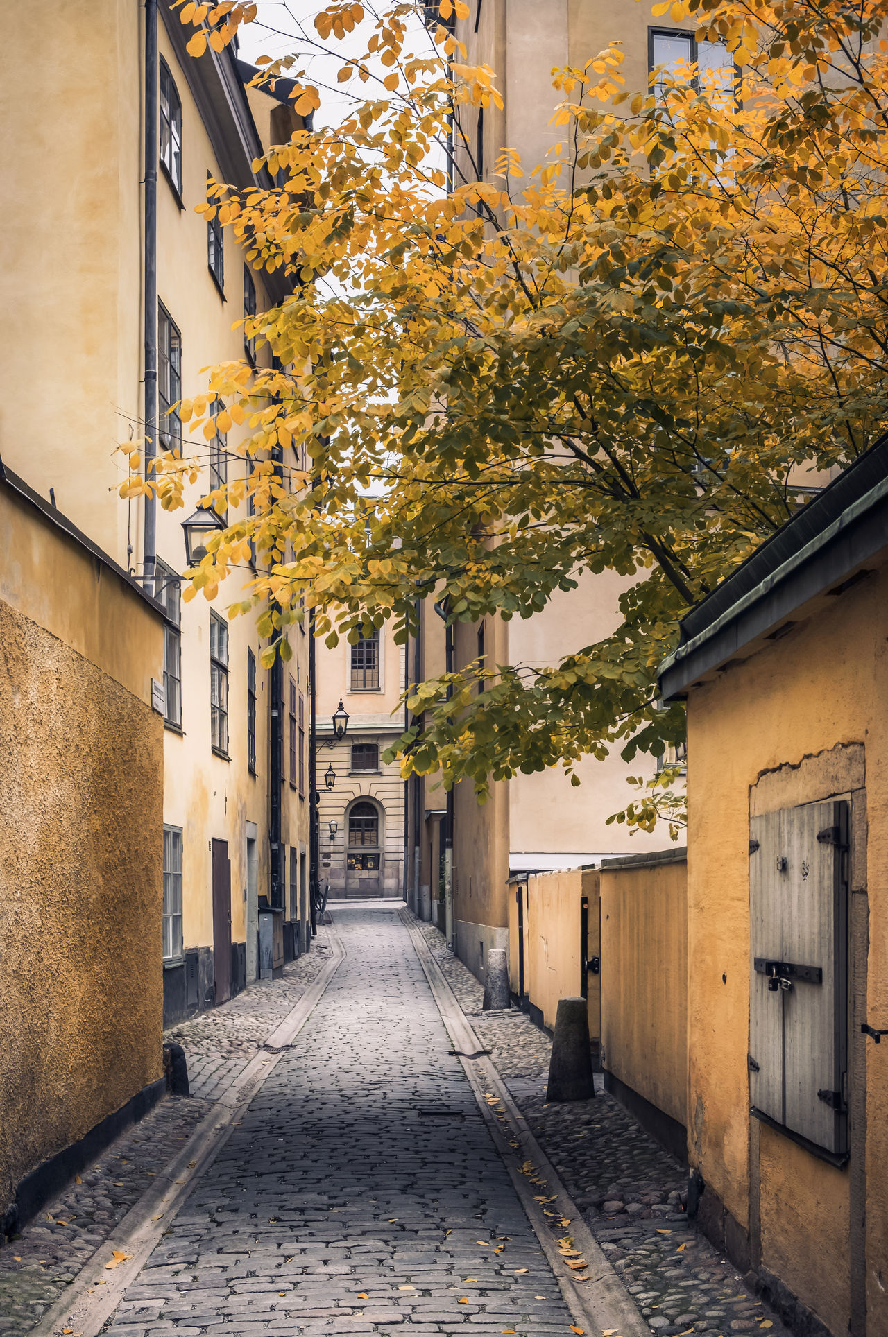 Idyllic street in old town Stockholm, Sweden Architecture Autumn Building Exterior Built Structure City Cobblestone Colors Cozy Day Holiday Idyllic Leaf Leaves Light And Shadow No People Old Town Outdoors Stockholm Street Streets Tourism Tourist Travel Destinations Tree Windows