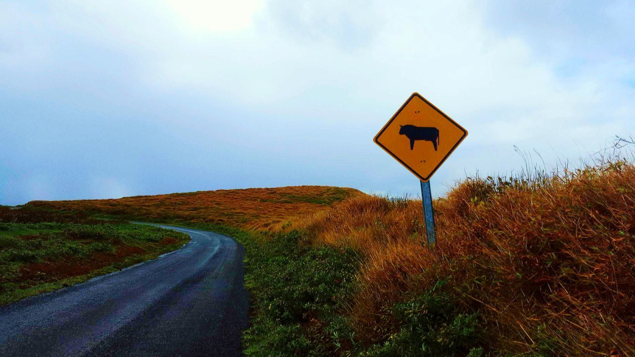 Road Sign Road Trip Cows Different Directions Paths Watch Out!