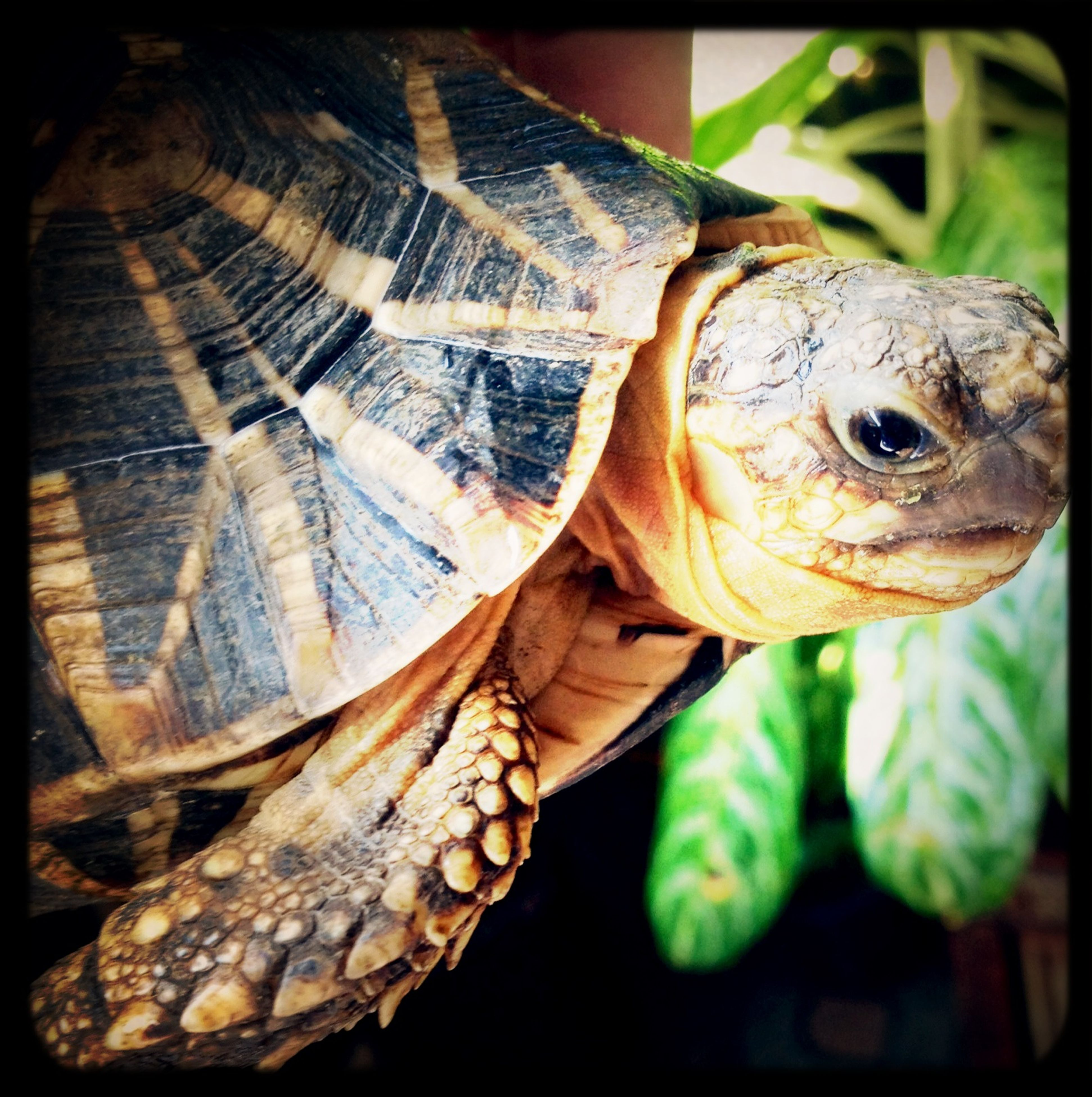 animal themes, one animal, animals in the wild, wildlife, close-up, reptile, transfer print, animal head, focus on foreground, zoo, portrait, animals in captivity, auto post production filter, outdoors, animal markings, day, animal body part, side view, turtle, zoology