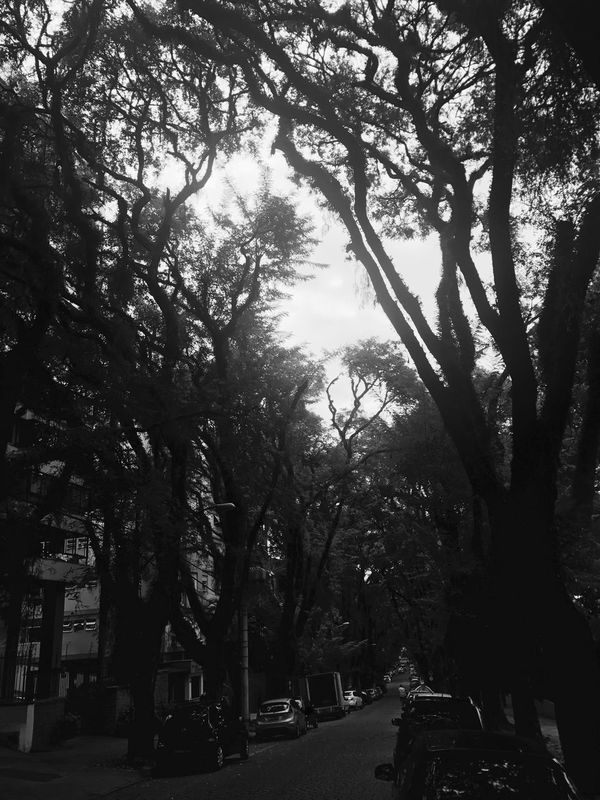 City Street Outdoors Nature Blackandwhite Photography Iphonephotography The Secret Space The Secret Spaces