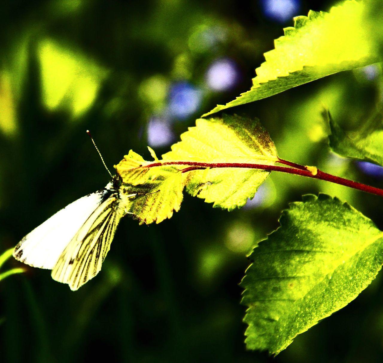 Nature Butterfly Park Rich Colors