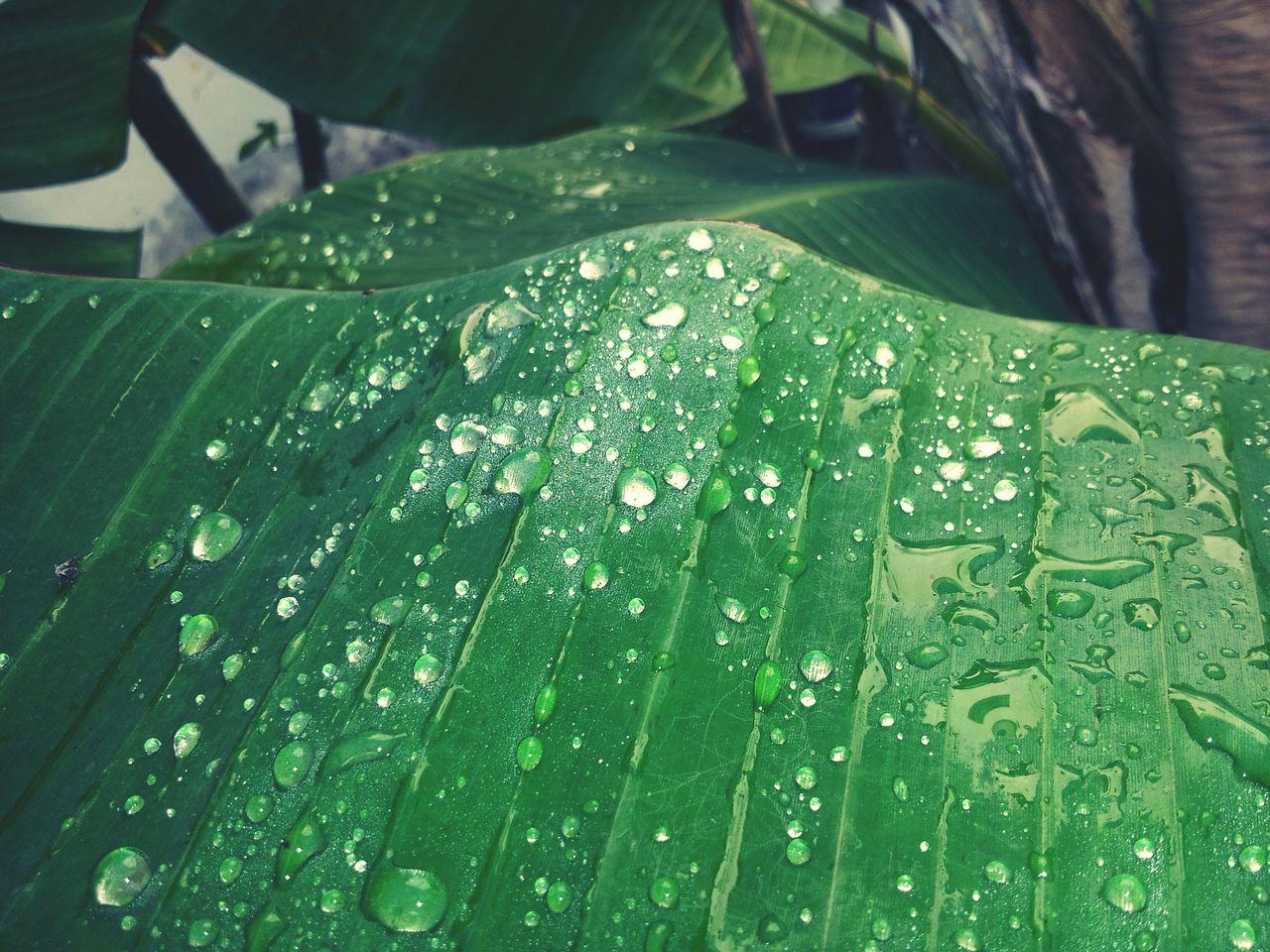Waterdrops Focus Perfection Is Everywhere Lemon Lime By Motorola