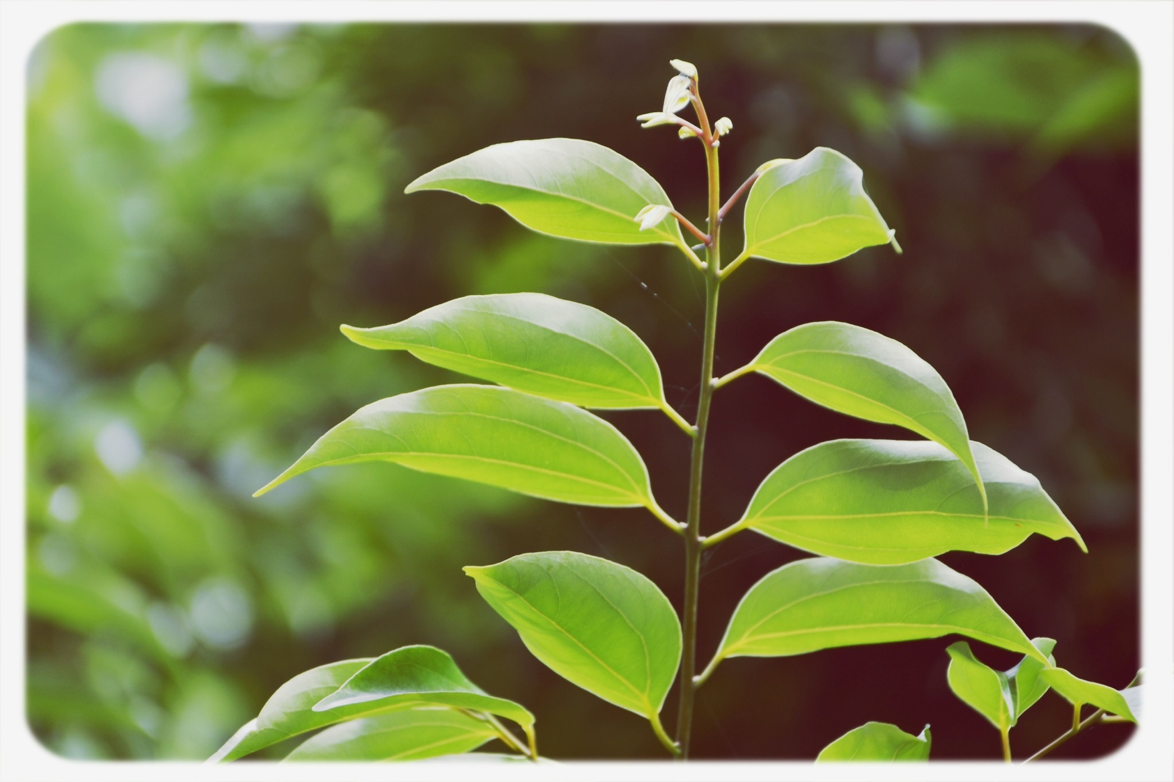 transfer print, leaf, growth, auto post production filter, green color, plant, close-up, nature, focus on foreground, freshness, beauty in nature, growing, stem, day, fragility, outdoors, selective focus, green, no people, botany
