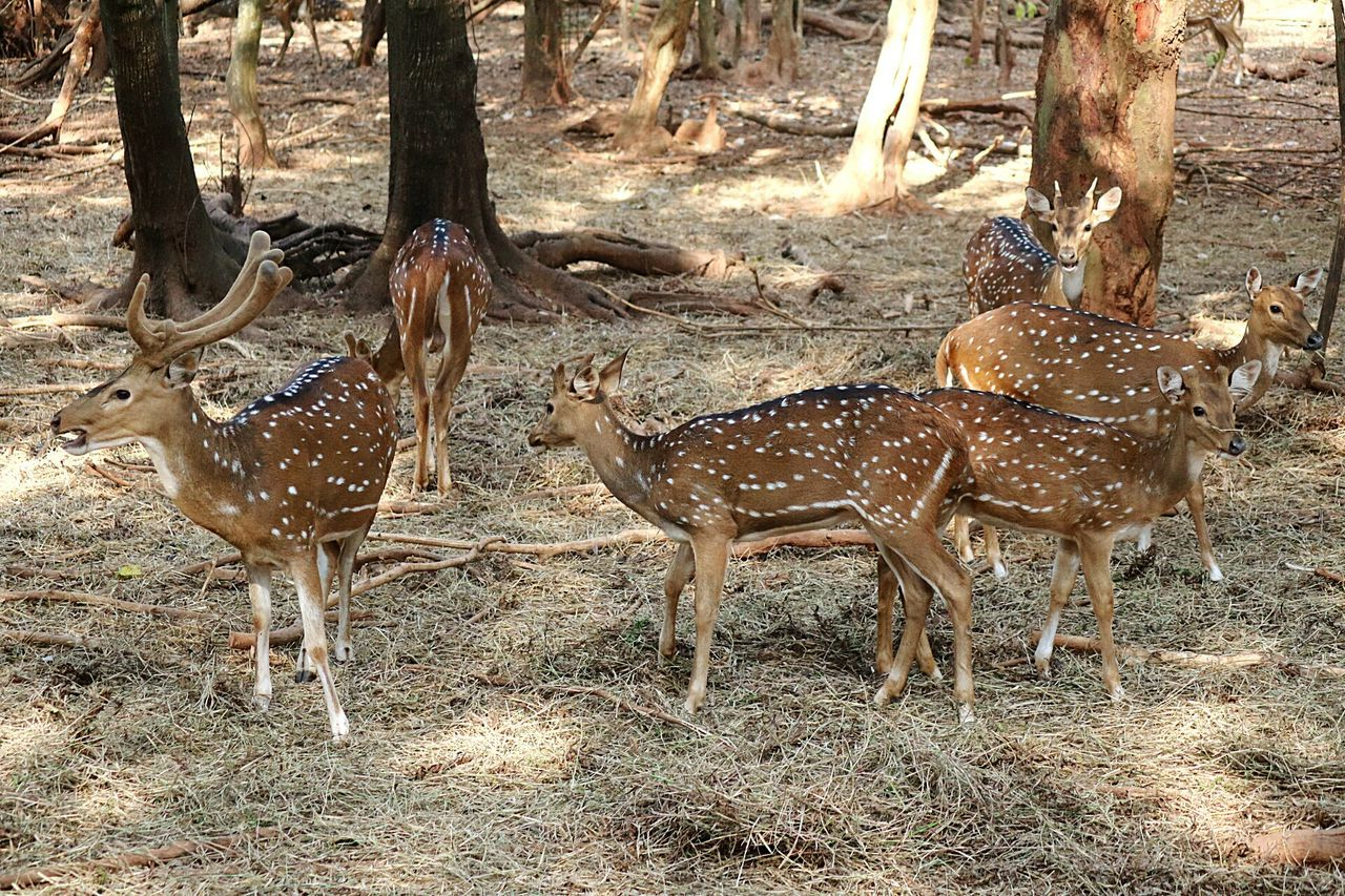 Chance Encounters Animal Themes Deer Deers Deer Park Deers Nature Beauty Peace Nandankanan Nandankanon Bhubaneswar,india Bhubaneswar My Year My View