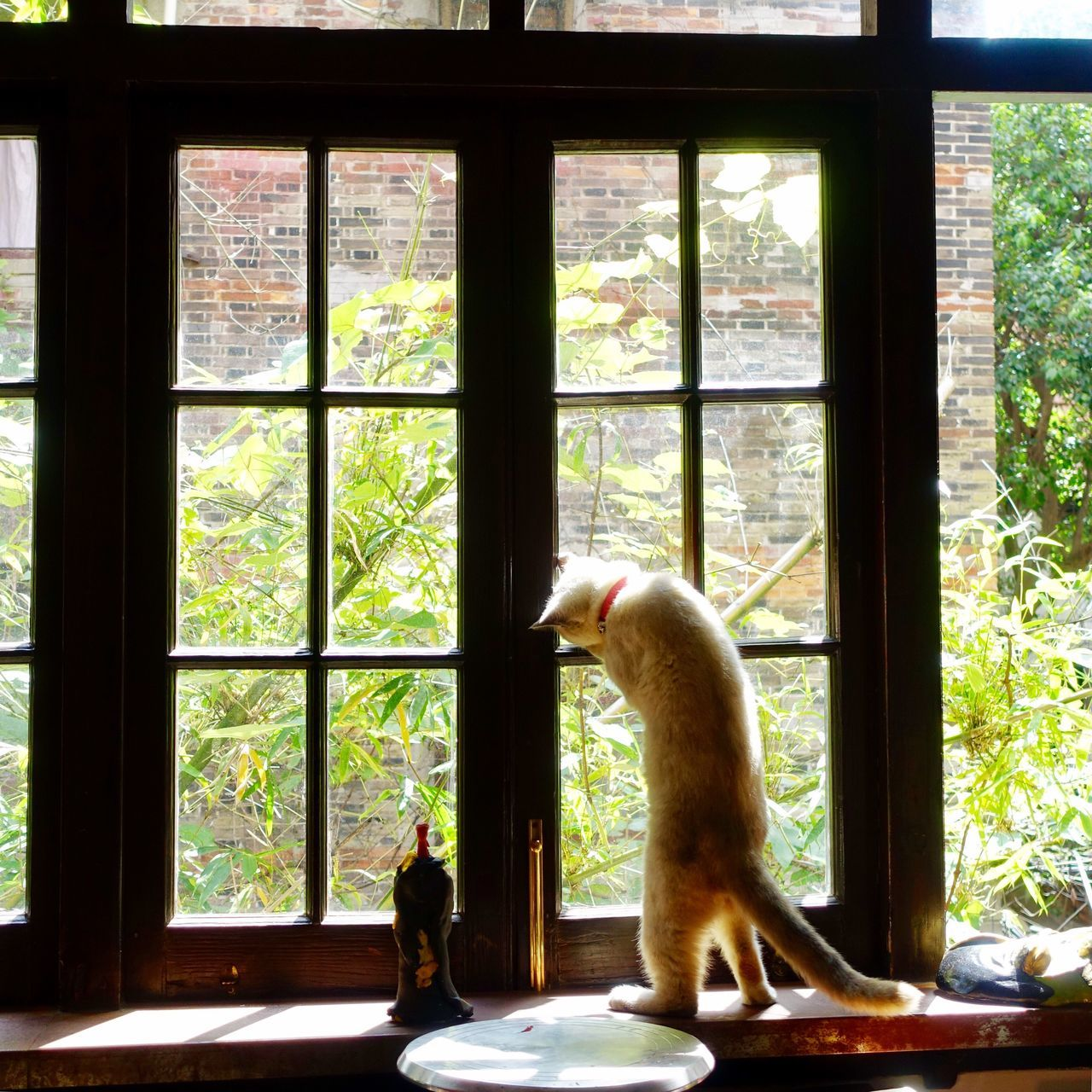 window, one animal, animal themes, day, indoors, tree, mammal, full length, animals in the wild, nature, no people