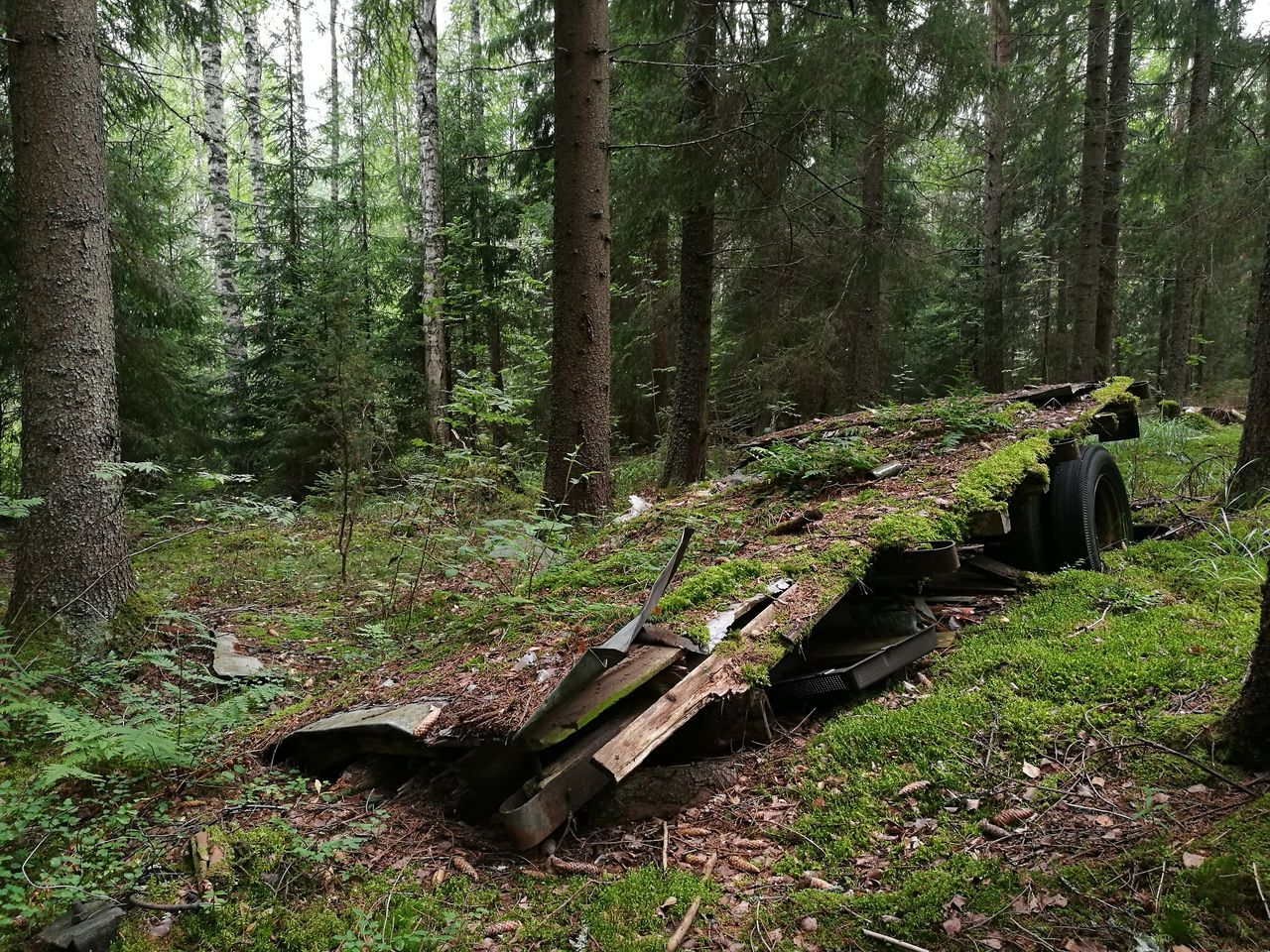 old trailer in forest.. Forest Find Walking In The Forest Abandoned Finland Nofilter Noedit HuaweiP9 Smartphone Photography Purist No Edit No Filter Nature Just Now